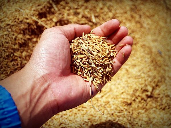 Azienda Agricola Ardizzina | Prodotti Agricoli di Qualità | Casale Monferrato